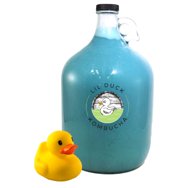 ocean blue flavored kombucha gallon lil duck